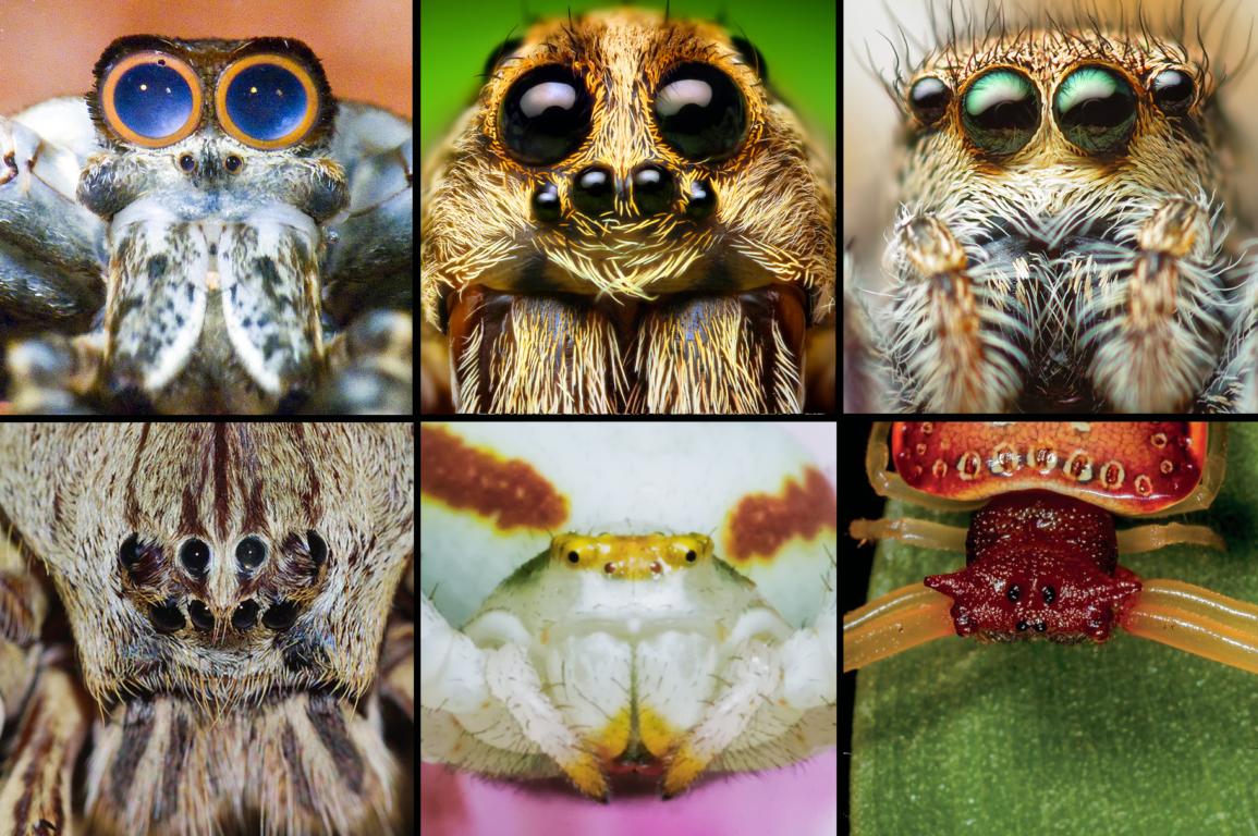 A Field Guide to Spiders of Austrlalia CSIRO Publishing