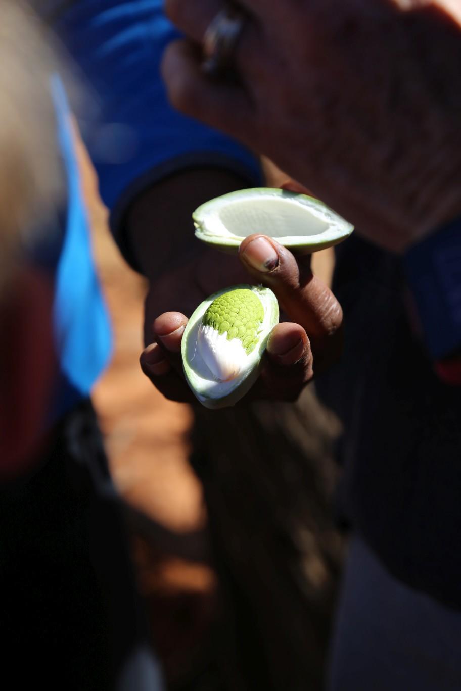 Gagurla, or bush pear, found at the MRO by Ernie Dingo