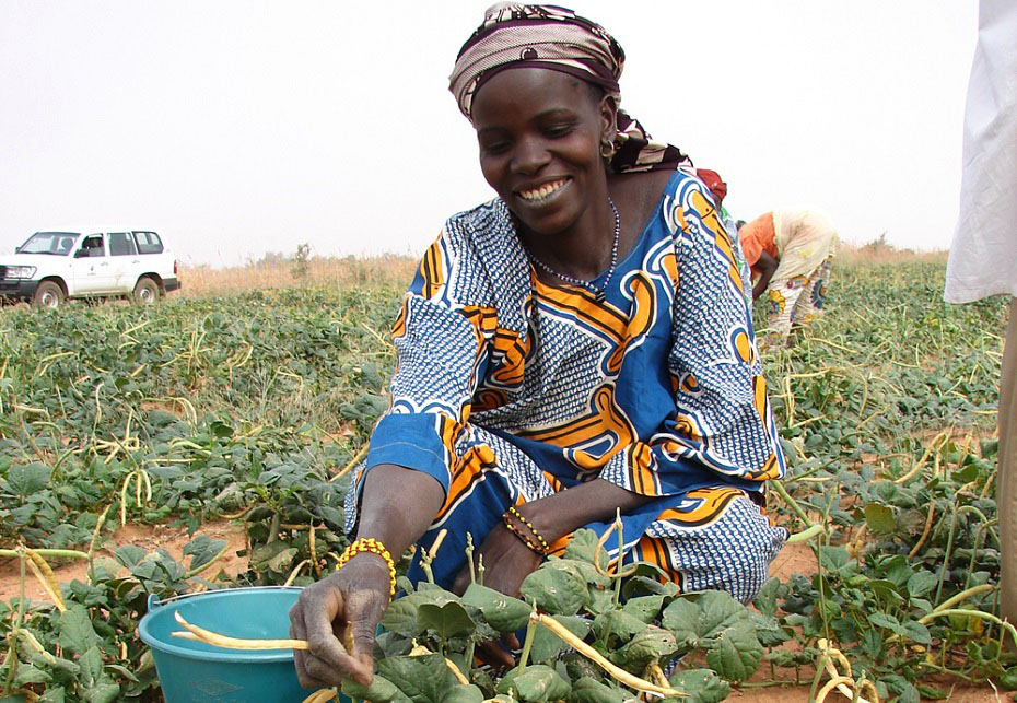 A cowpea farmer in Africa.