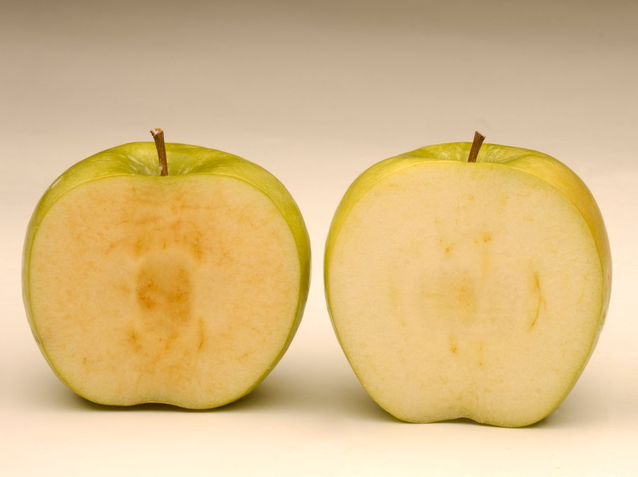 Unlike a conventional apple (on the left) Arctic® apples do not brown when sliced. Photo: OSF