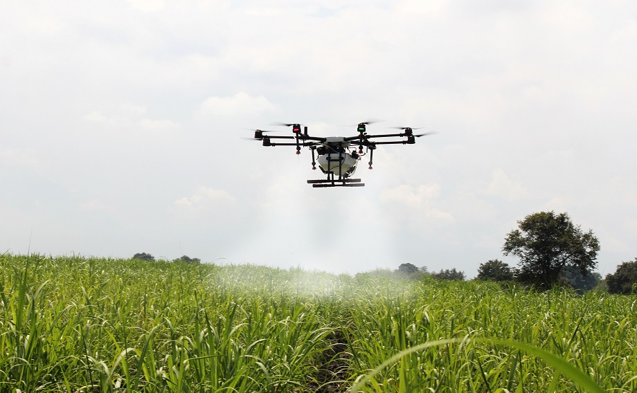 A drone spraying a sugar cane crop