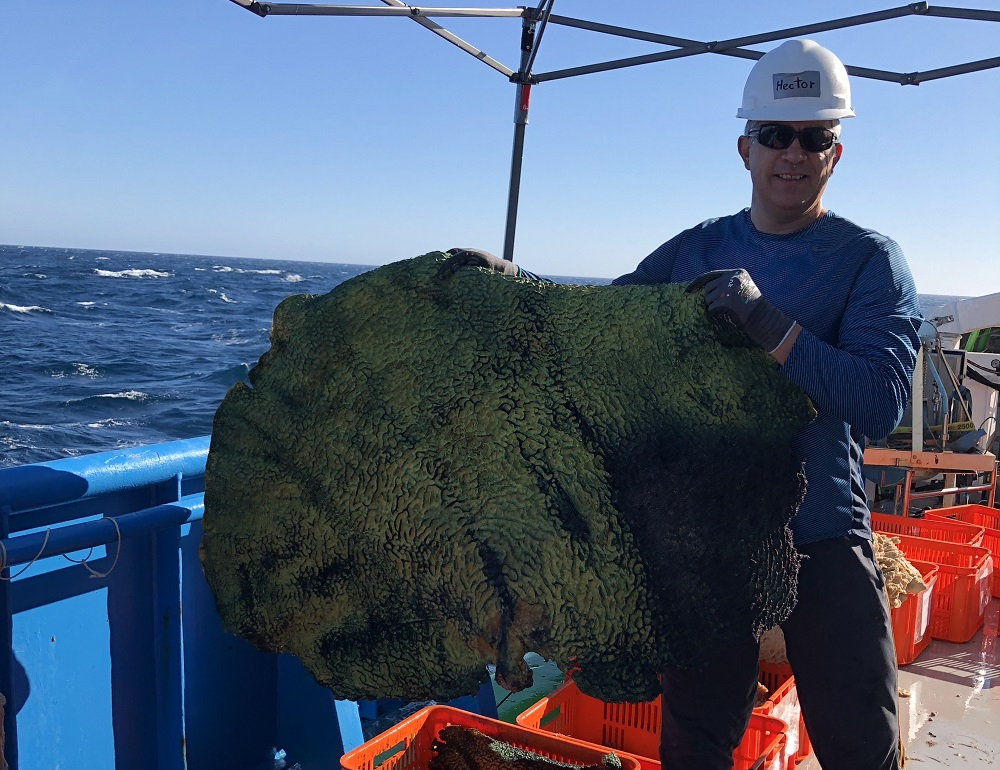 Researcher holding giant sponge