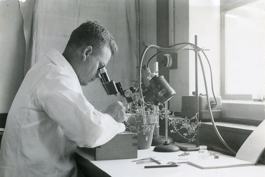 A researcher looking down a microscope