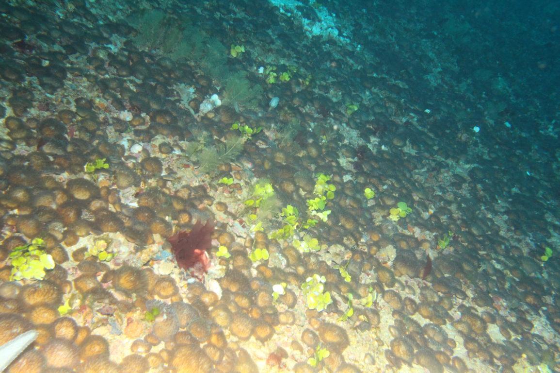 underwater photo of corals