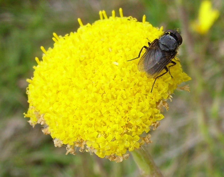 a fly on a yellow flower