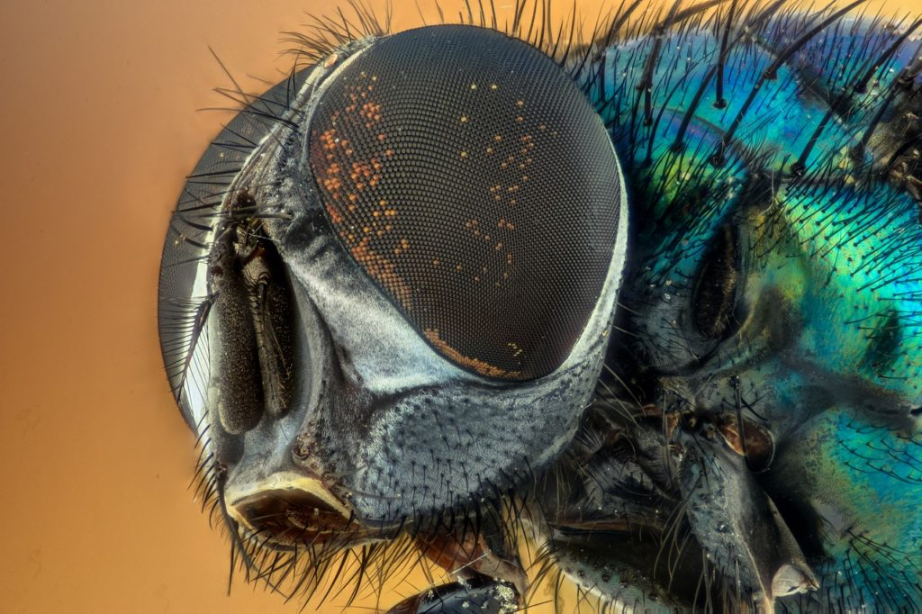 macro close up of a fly's head