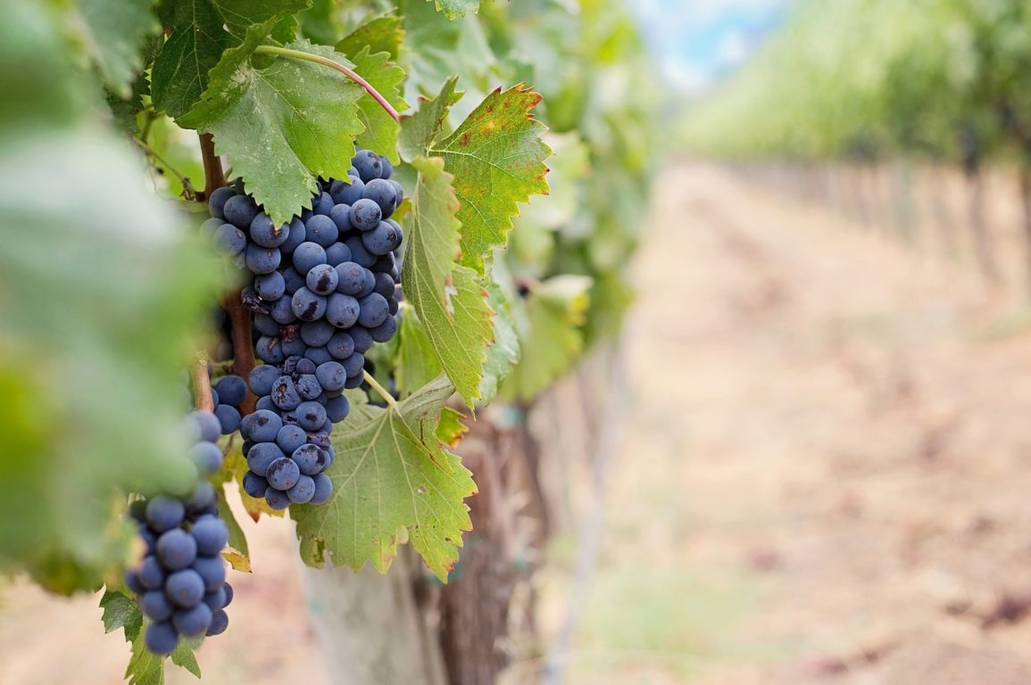 You might not see it, but you sure can taste it: salt in wine grapes is an unpleasant experience.