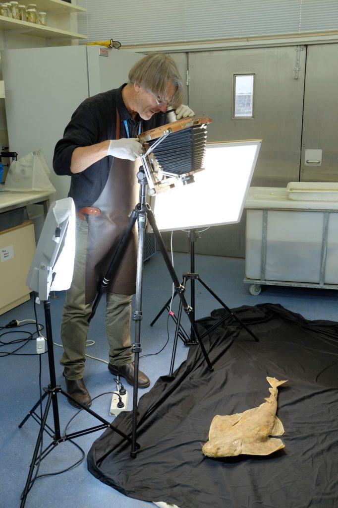 A man looking down through a tintype camera to photograph a large fish specimen lying on a black cloth on the floor.
