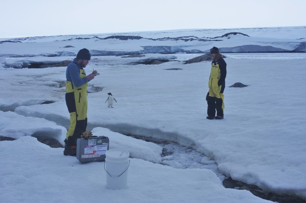 We deployed our monitoring devices to a lovely flowing stream. Things freeze in Antarctica! Image: Darren Koppel