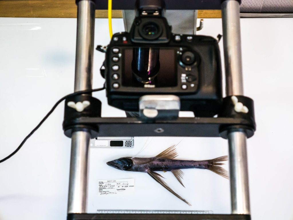 Art meets science. Photographing the specimens we find on our voyages is important to capture the colour, size and form of fishes before they are preserved and stored. Image: Asher Flatt & Marine National Facility