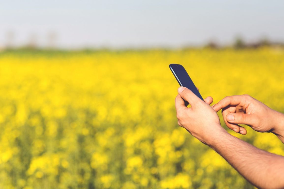 A hand holding a smart phone in a field of yellow canola