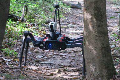 A six legged robot walks next a tree in the rainforest