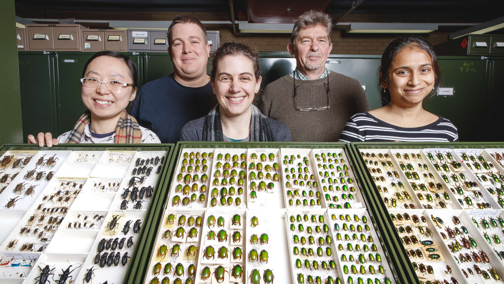A group photo of CSIRO researchers with some of the Australian National Insect Collection
