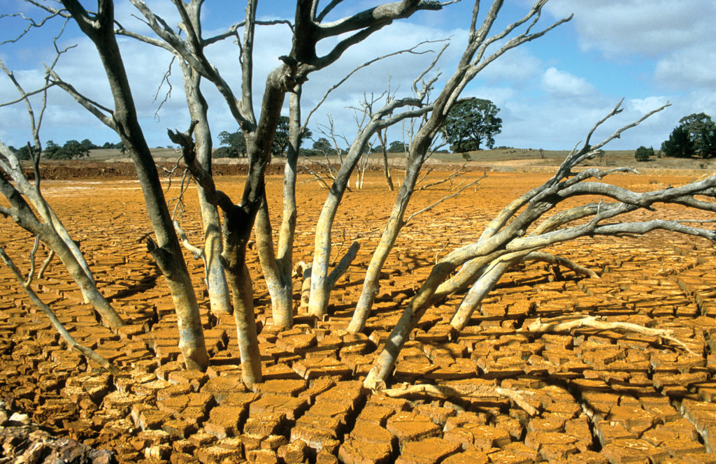 Dry dam bed with dead tree