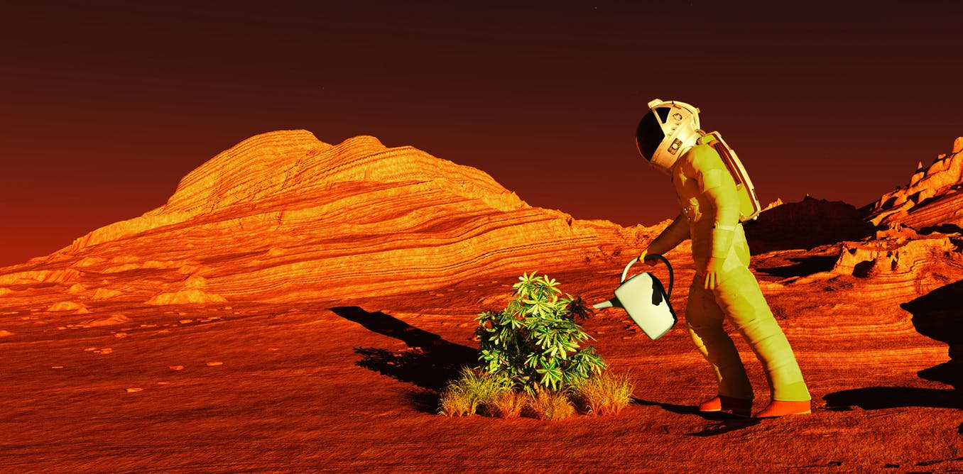 An person in a space suit watering a plant in a red desert
