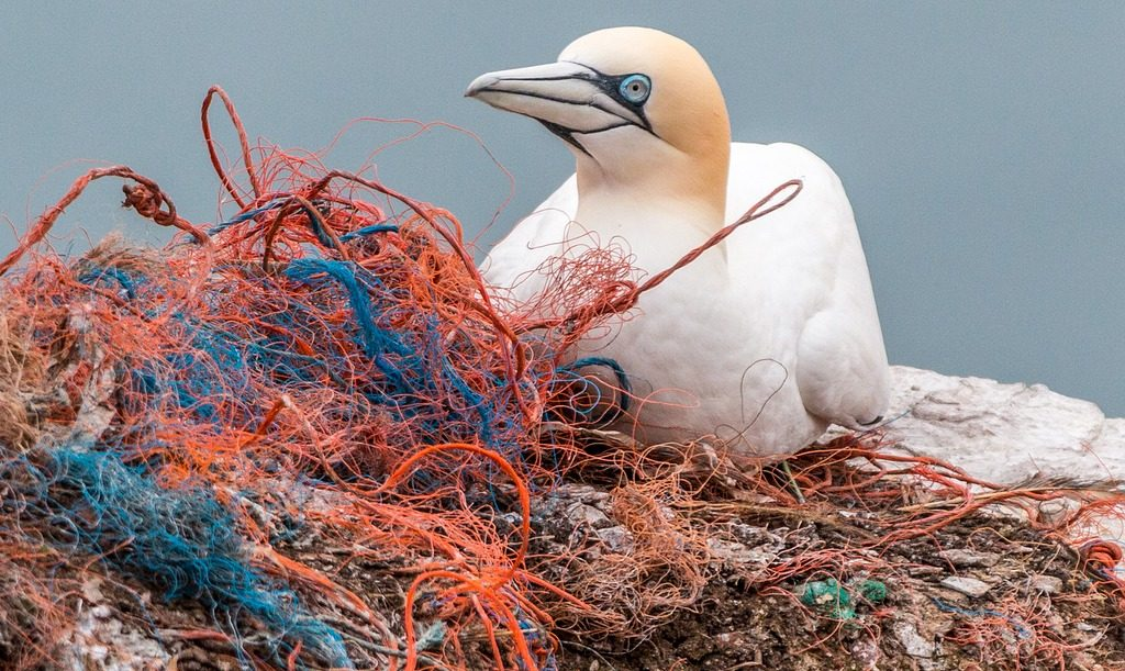 A seabird sitting on discarded fishing nets