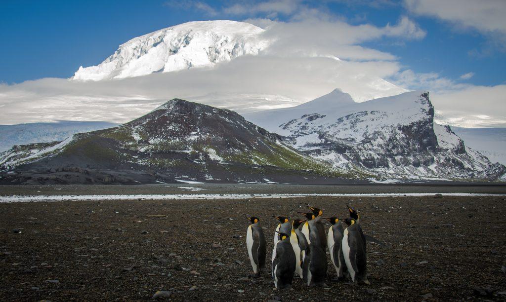group of king penguins in antarctic landscape