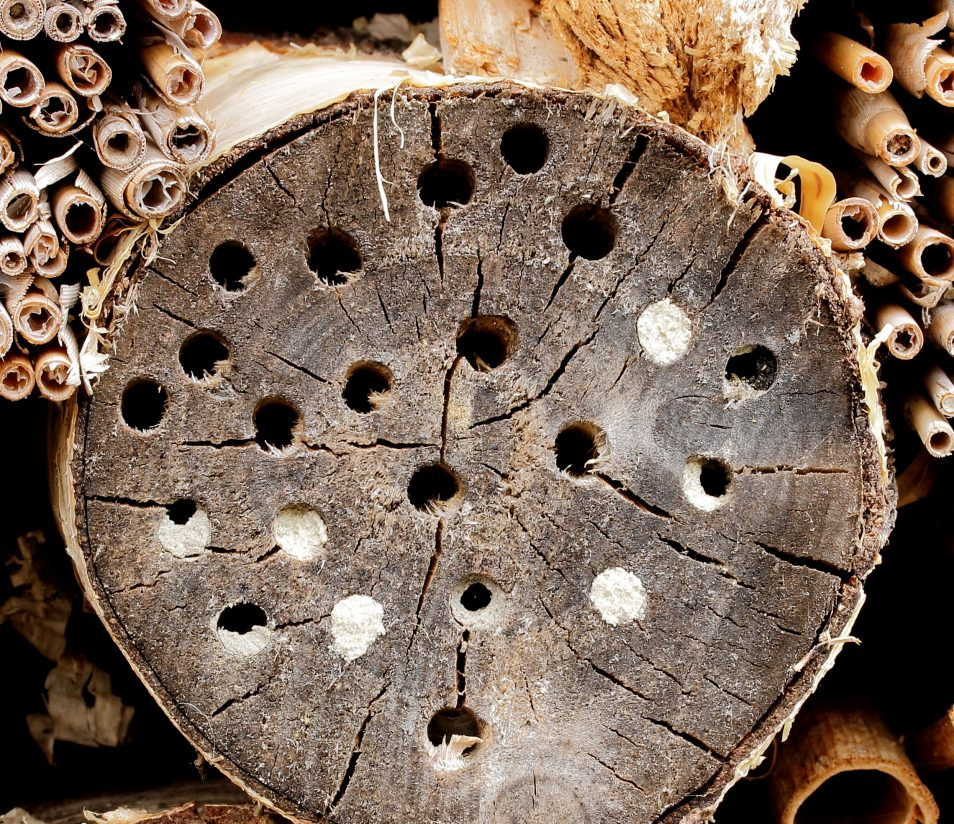 A log with holes drilled in it