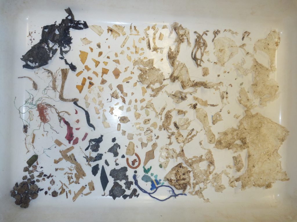 The over 300 pieces of plastic that were removed from just one part of the gastrointestinal system of a green sea turtle. When the load gets this high, the probability of death reaches 100%. Image: Kathy Townsend