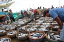 Mixed baskets of mostly Yellowfin and Bigeye Tuna at the Lampulo Fishing Port in Banda Aceh Craig Proctor, Author provided (No reuse)