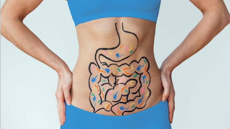 close up on lady's stomach with the gut system drawn on