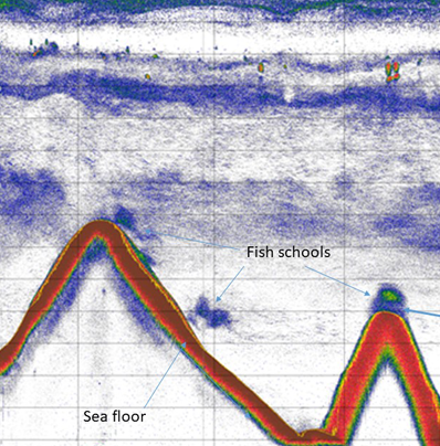 An echogram graph with red lines depicting the sea floor and patches of blue depicting schools of fish