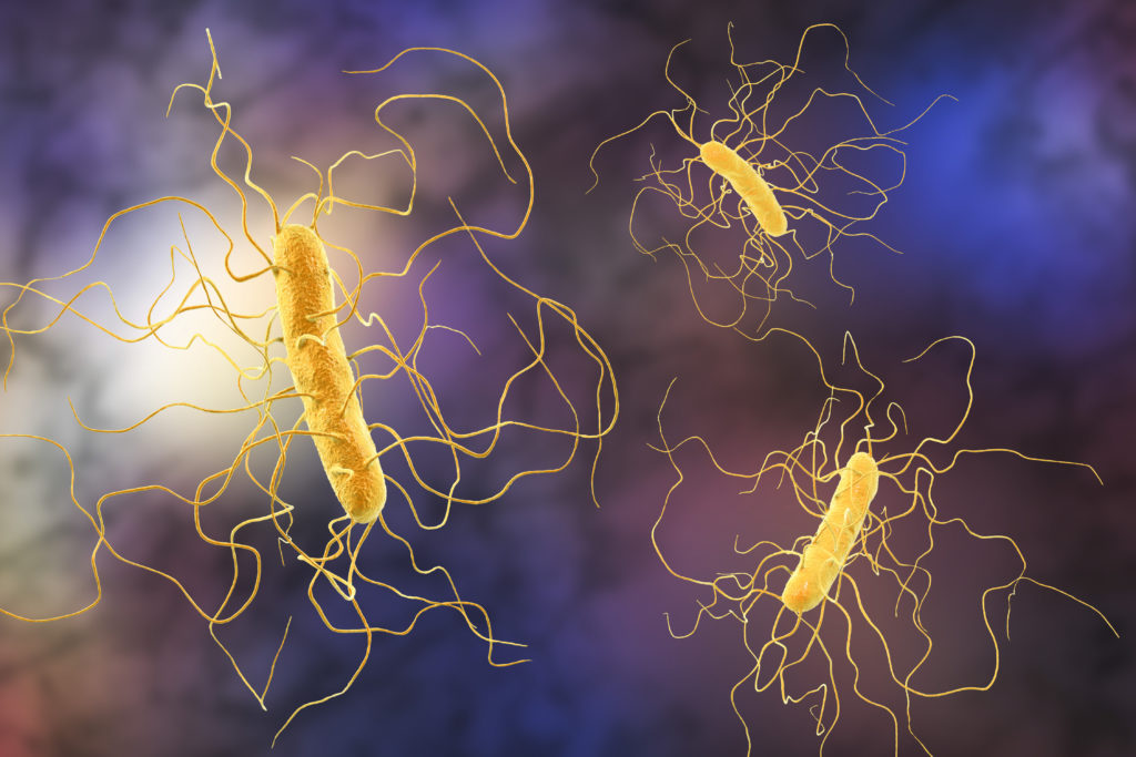 Illustration of Clostridium difficile bacteria