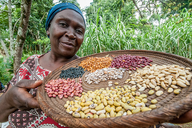 A Ugandan female farms holds a tray of different bean seeds