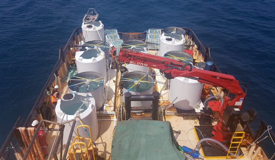 The tanks on the back of the boat, where the coral larvae are reared.