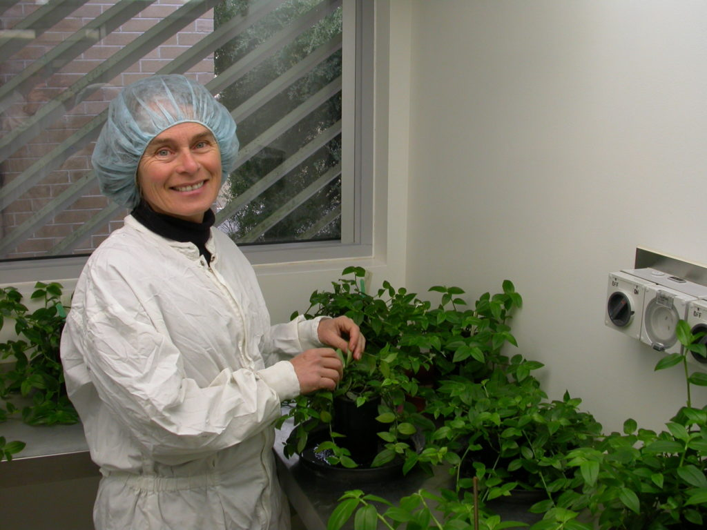 A CSIRO scientist in the quarantine lab with a wandering trad plant