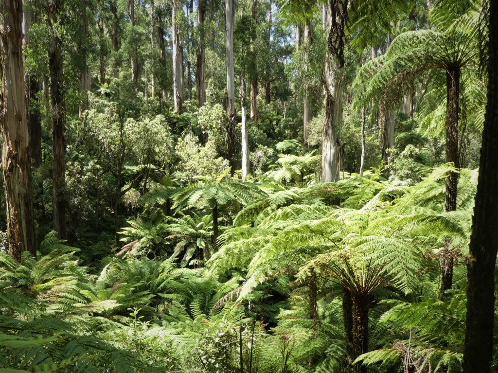 A rainforest.