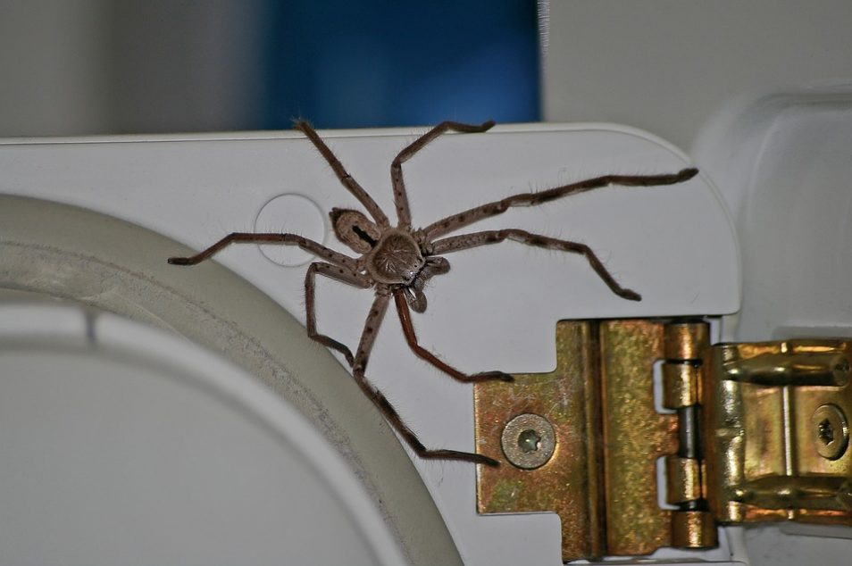 A picture of a huntsman spider on a fridge