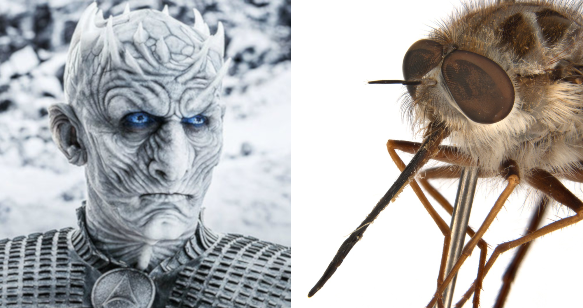 Close up photo of a fly's head showing large eyes and spine-like hairs. Next to a picture of the Night King from Game of Thrones