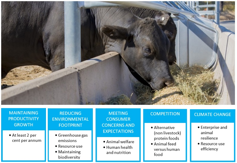 Livestock sector challenges
