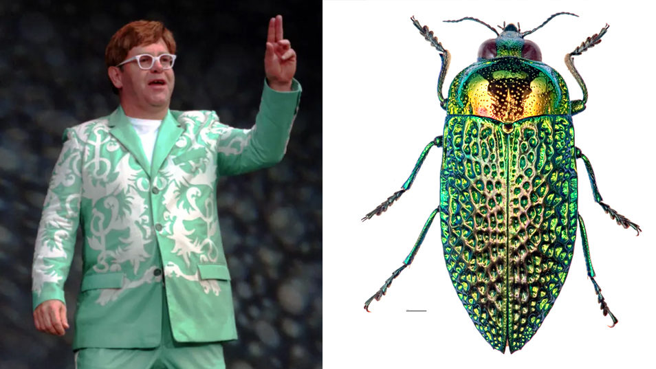 Elton John in green patterned suit compared to green beetle.