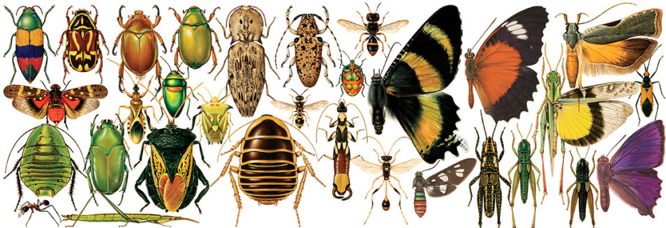 Illustration of bugs