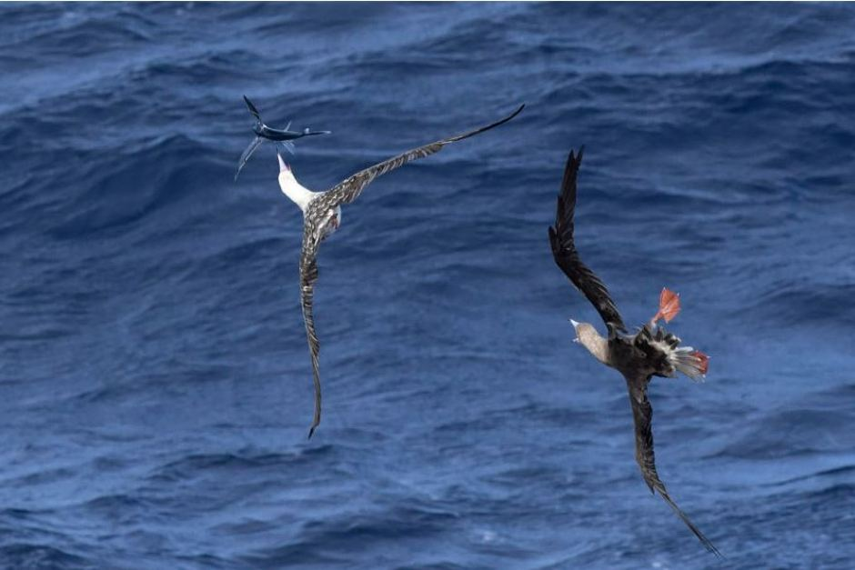 Two birds and a fish in midair against a blue ocean background
