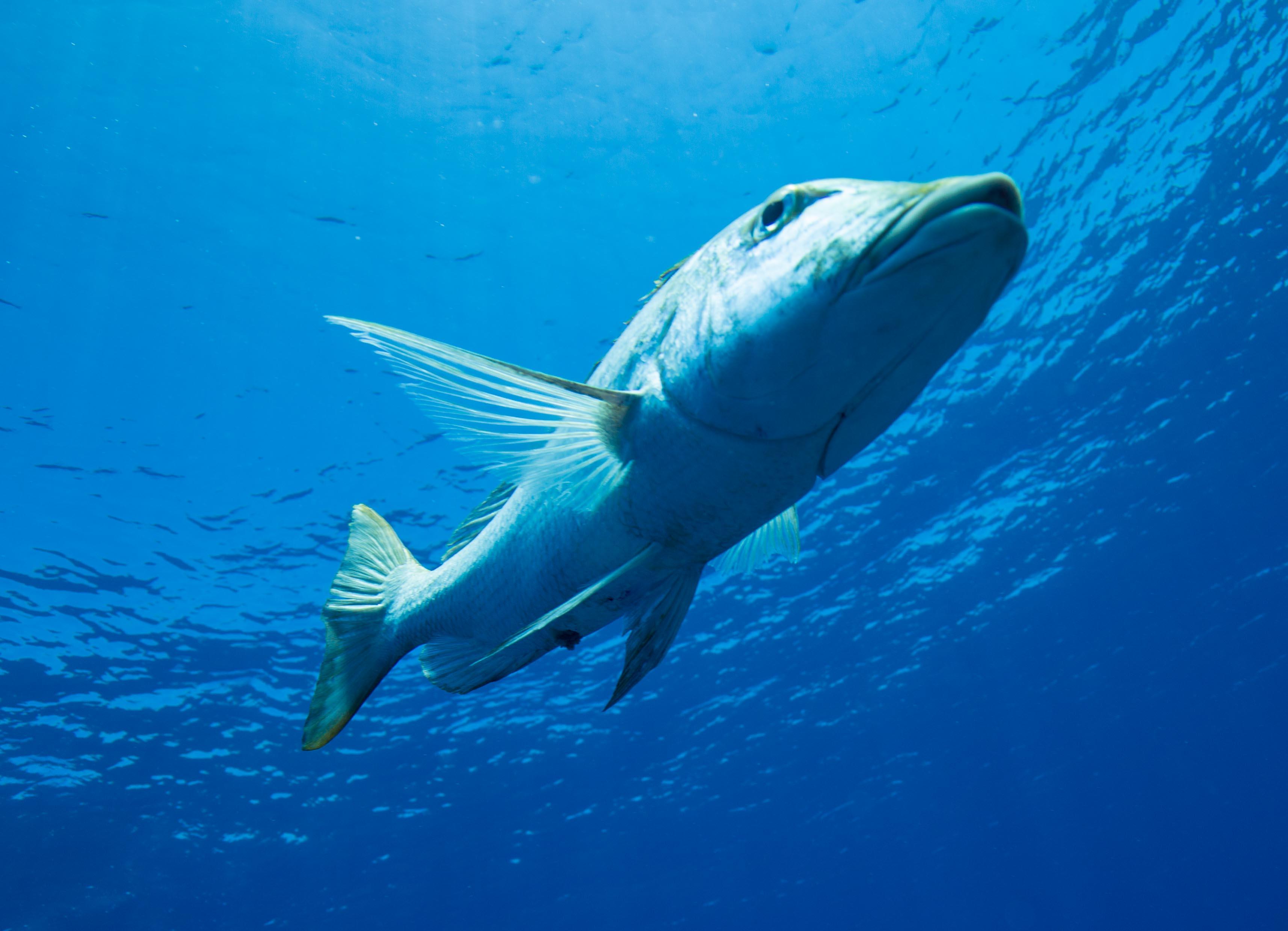 Nice one BRUV! Counting deep-water fish at Ningaloo Reef - CSIROscope