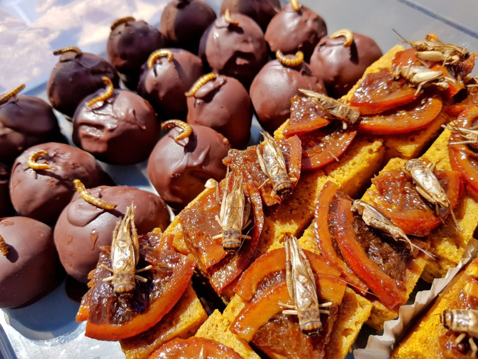 Baked goods with insects on top of them. In the background there are chocolate coated balls with worms as sprinkles, and in the foreground there is an orange slice with a cricket on each.