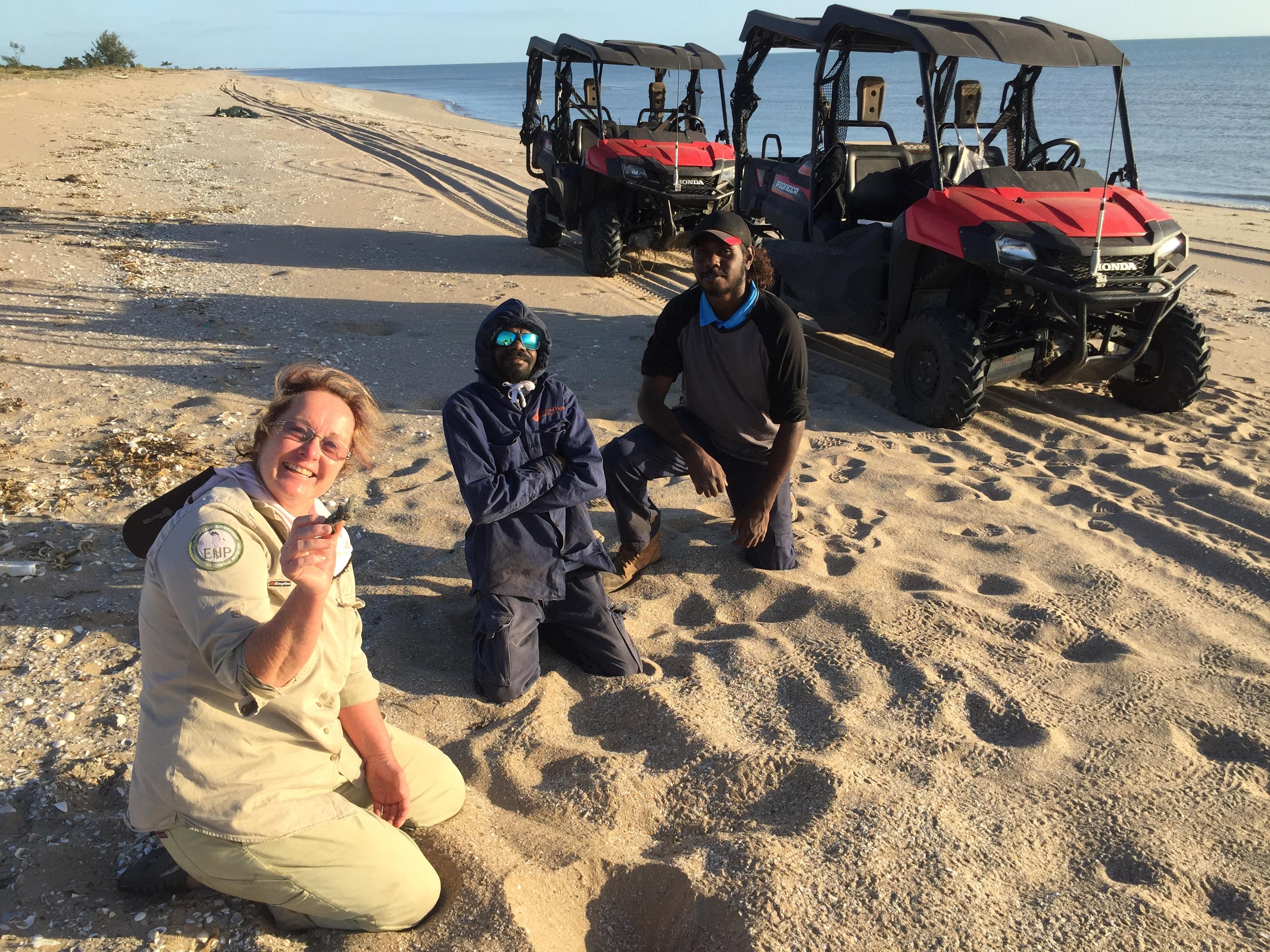 Turtles survey team on Cape York beach