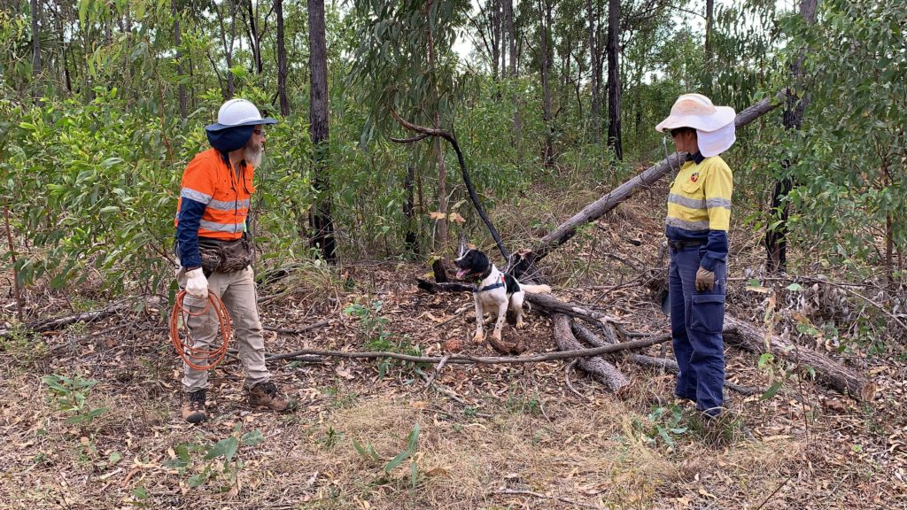 two scientists with fluro hi-vis gear and a black and white dog in between them. They are in the bush