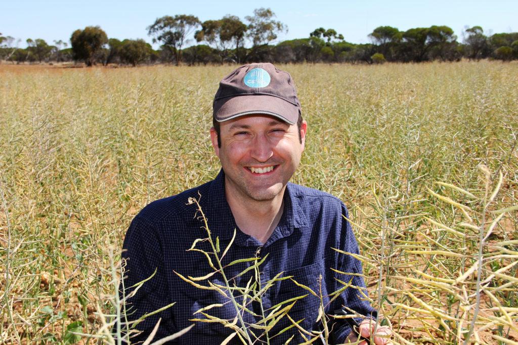 Dr Matthew Nelson squatting amonst polyploidy canola crops wearing a CSIRO cap