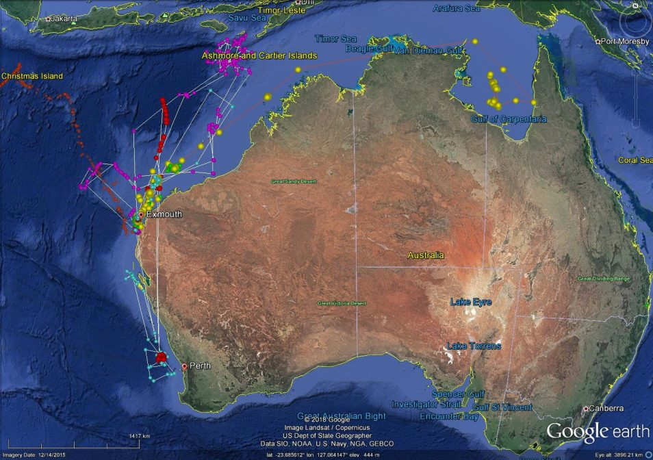 Google map of tracked whale sharks with coloured lines showing where they have travelled