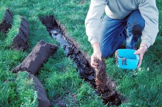 Researchers hunt for worms near Mortlake, Victoria.