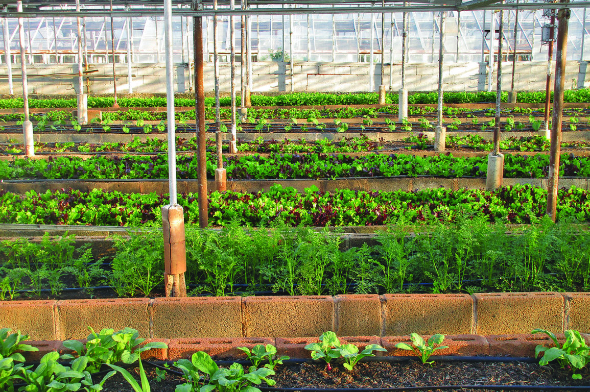 Food growing in a greenhouse