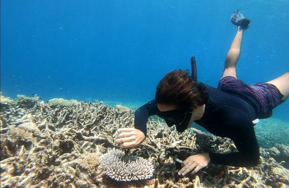 Researcher underwater taking a sample from coral