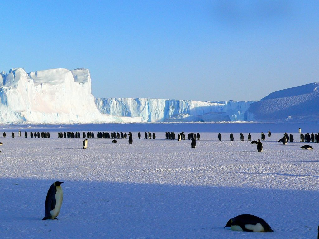An image of Antarctica. There are emperor penguins in the background and the foreground.