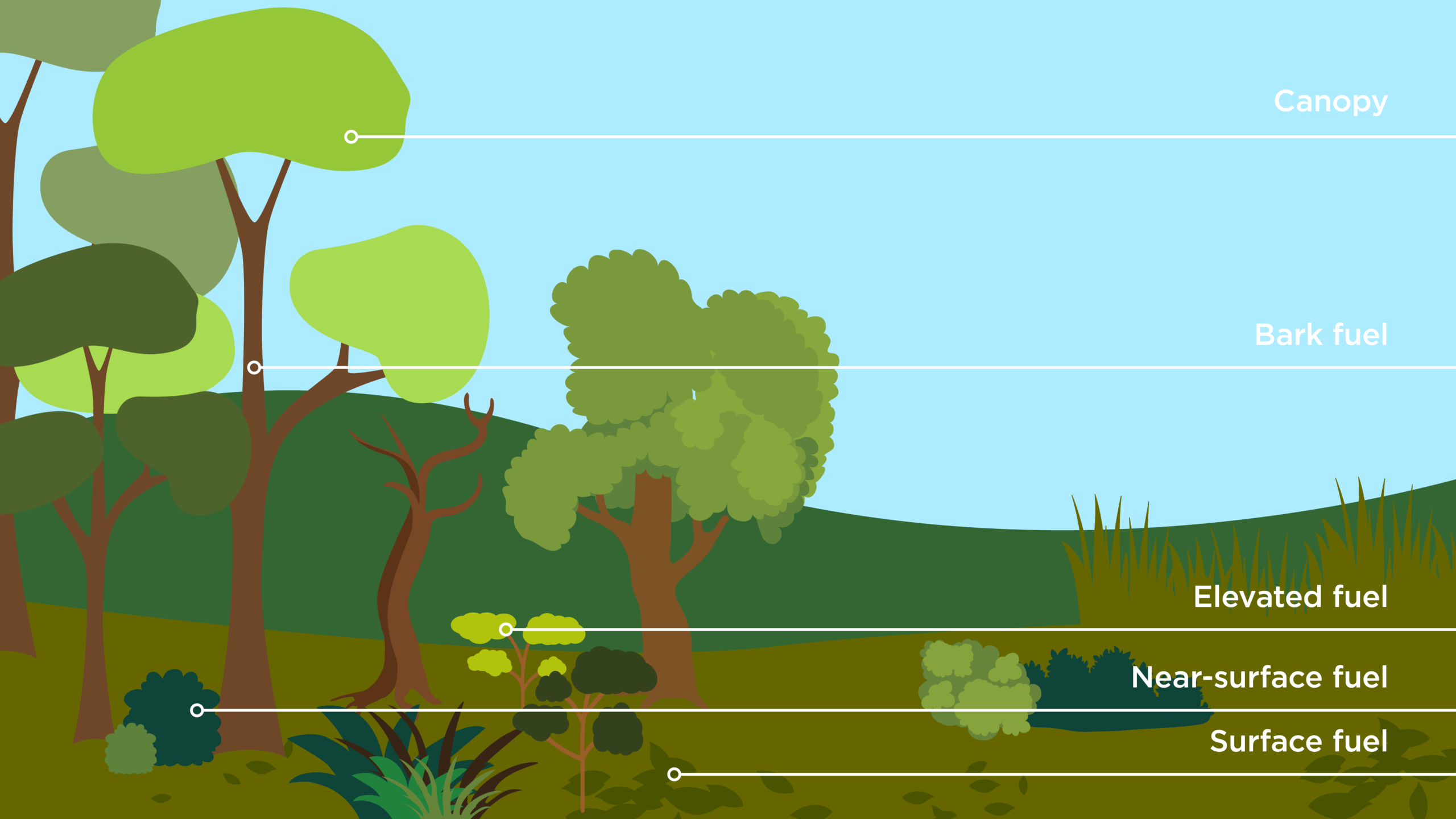 infographic showing the canopy at the top of the trees, bark fuel on the tree trunks, elevated fuel in short plants, near-surface fuel in shrubs on the ground and surface fuel as leaves on the ground