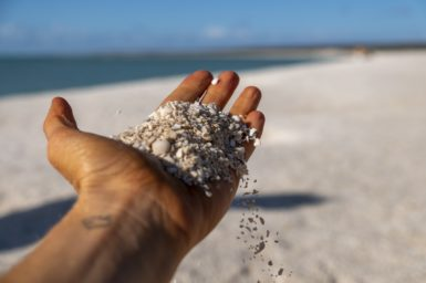 A hand holding up sand and shells. The beach is in the background.