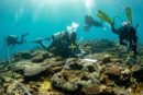 Divers swim near shallow reef to record marine debris